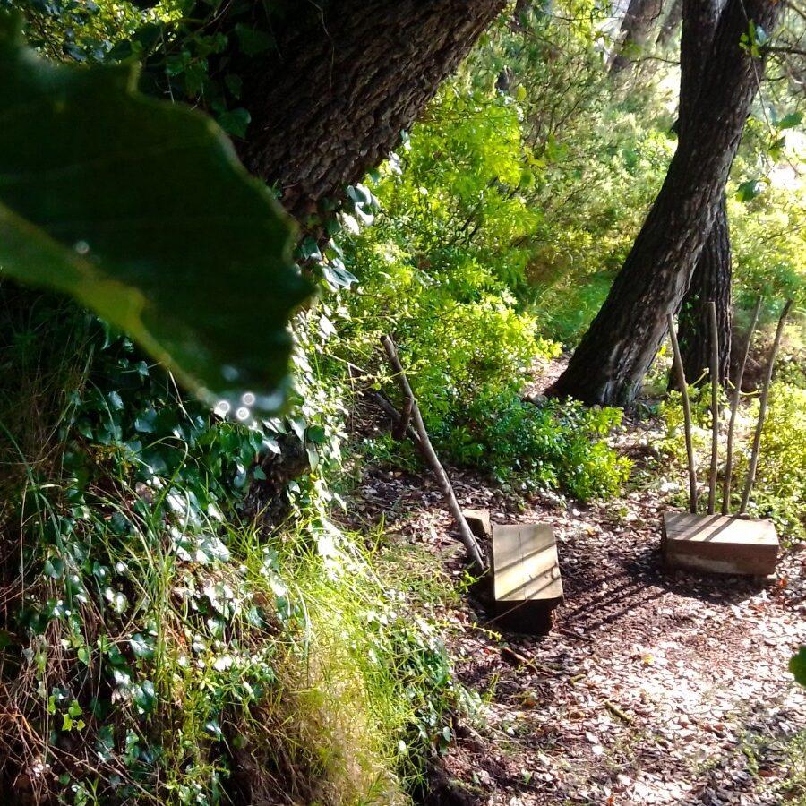 roure, consulta, teràpies naturals, teràpia forestal, bosc, salut
