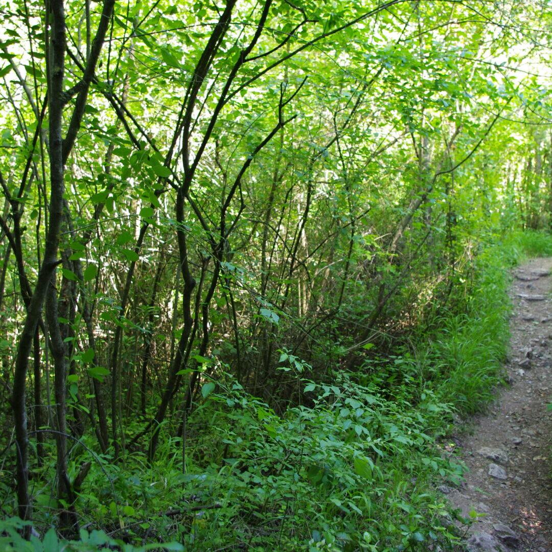 bosc, salut, teràpia forestal